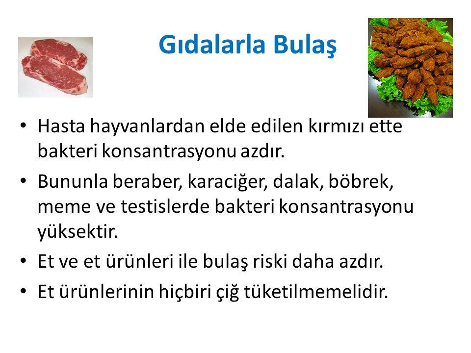 Gıdalarla Bulaş Hasta hayvanlardan elde edilen kırmızı ette bakteri konsantrasyonu azdır.