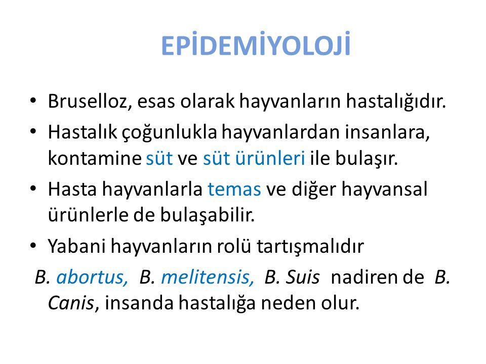 EPİDEMİYOLOJİ Bruselloz, esas olarak hayvanların hastalığıdır.