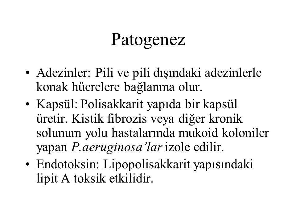 Patogenez Adezinler: Pili ve pili dışındaki adezinlerle konak hücrelere bağlanma olur.