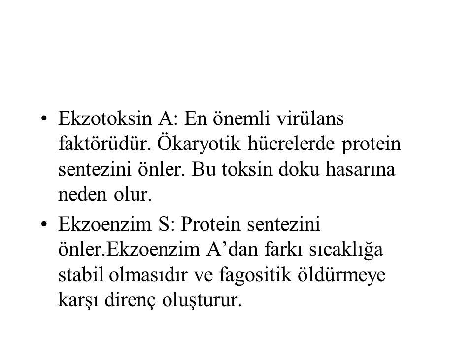 Ekzotoksin A: En önemli virülans faktörüdür