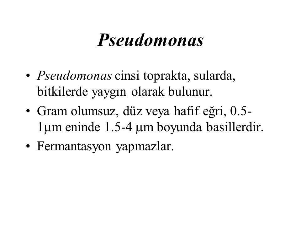 Pseudomonas Pseudomonas cinsi toprakta, sularda, bitkilerde yaygın olarak bulunur.