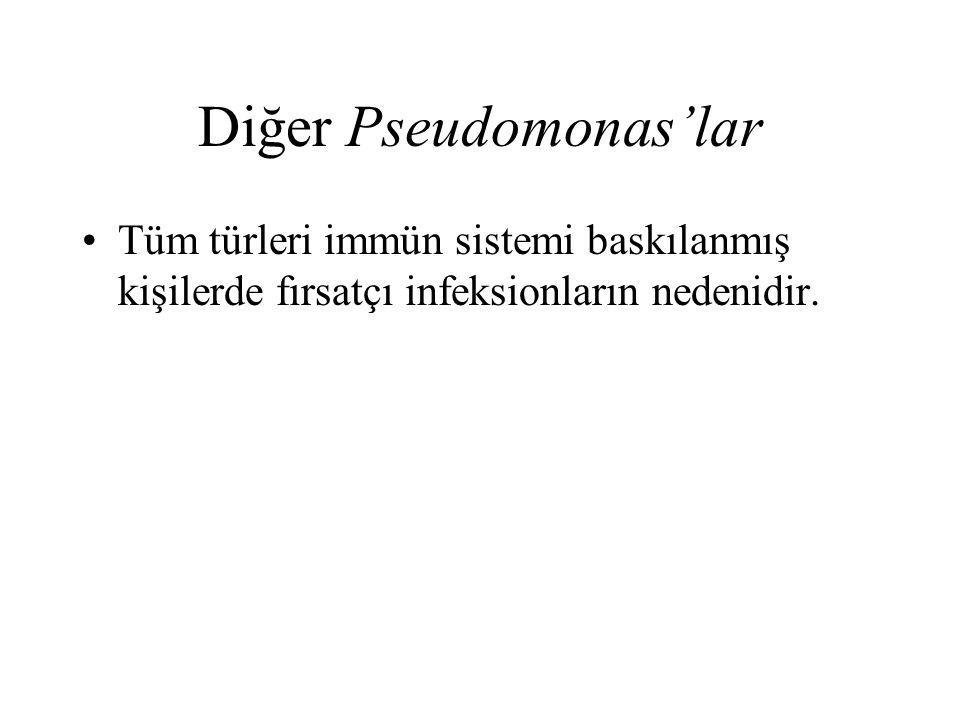 Diğer Pseudomonas'lar