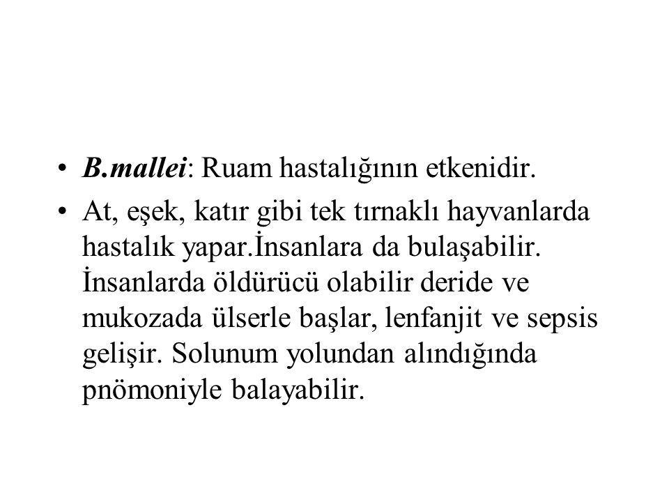 B.mallei: Ruam hastalığının etkenidir.
