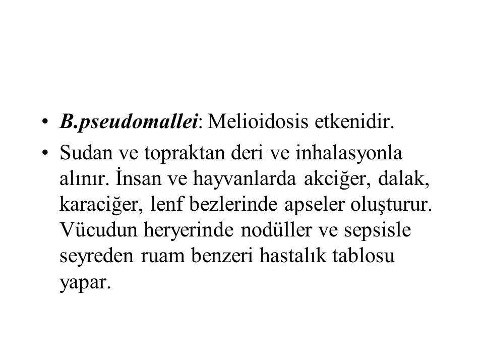 B.pseudomallei: Melioidosis etkenidir.