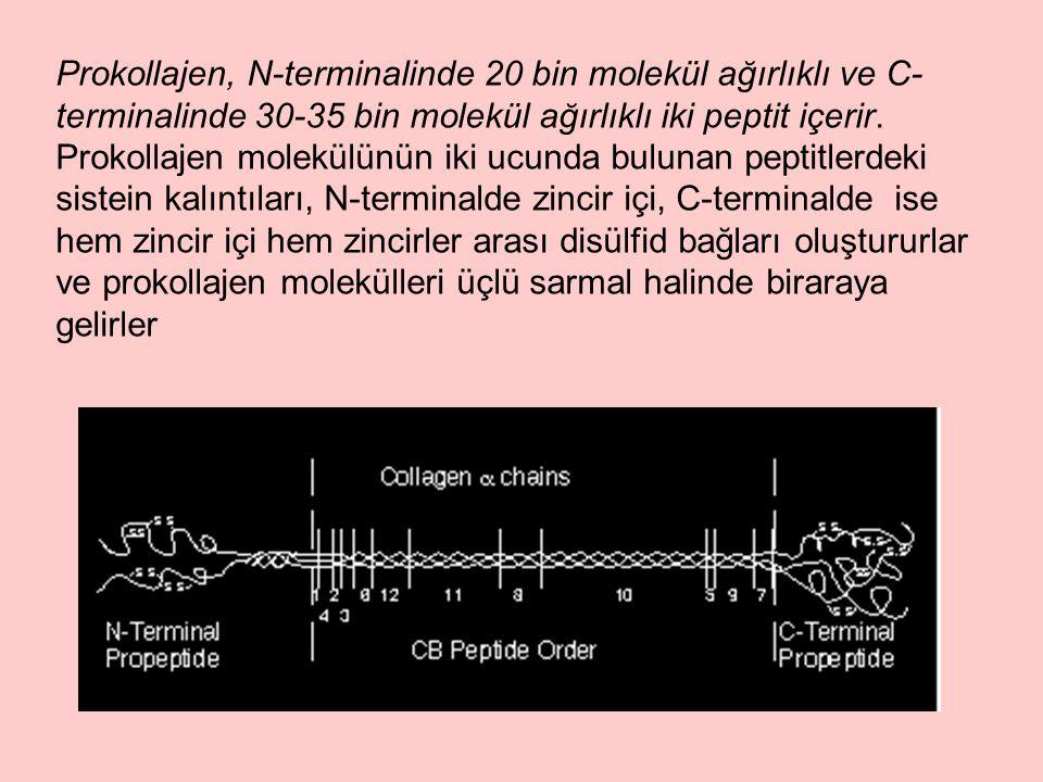 Prokollajen, N-terminalinde 20 bin molekül ağırlıklı ve C-terminalinde 30-35 bin molekül ağırlıklı iki peptit içerir.