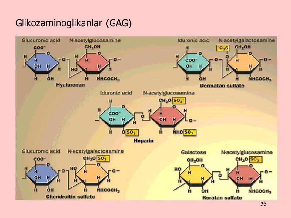 Glikozaminoglikanlar (GAG)