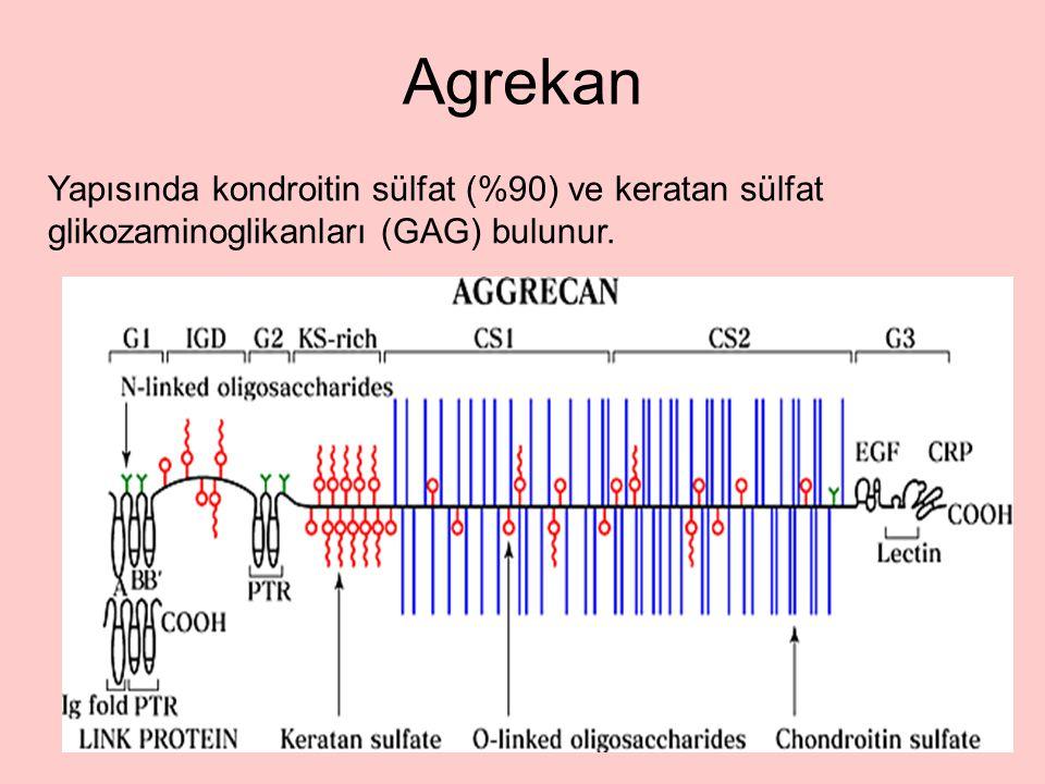 Agrekan Yapısında kondroitin sülfat (%90) ve keratan sülfat glikozaminoglikanları (GAG) bulunur.