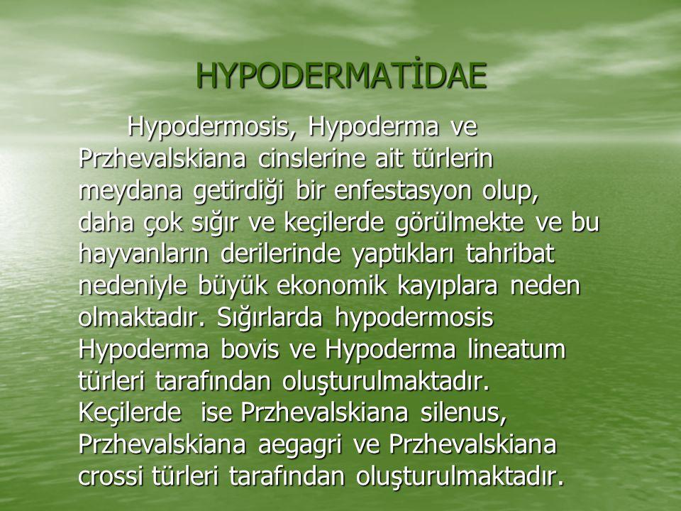HYPODERMATİDAE