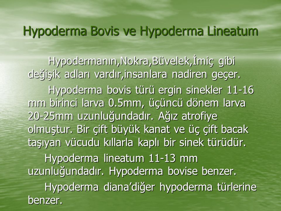 Hypoderma Bovis ve Hypoderma Lineatum