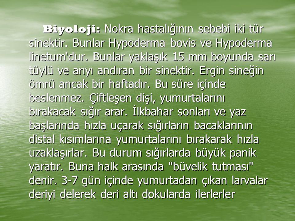 Biyoloji: Nokra hastalığının sebebi iki tür sinektir