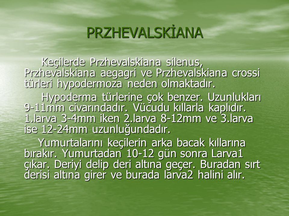 PRZHEVALSKİANA Keçilerde Przhevalskiana silenus, Przhevalskiana aegagri ve Przhevalskiana crossi türleri hypodermoza neden olmaktadır.