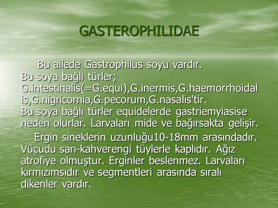 GASTEROPHILIDAE