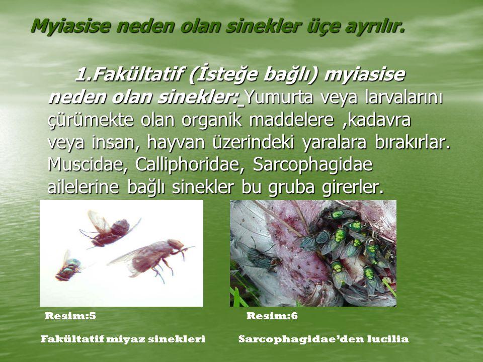 Myiasise neden olan sinekler üçe ayrılır.
