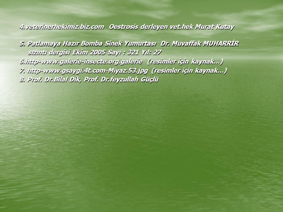 4.veterinerhekimiz.biz.com Oestrosis derleyen vet.hek Murat Kutay