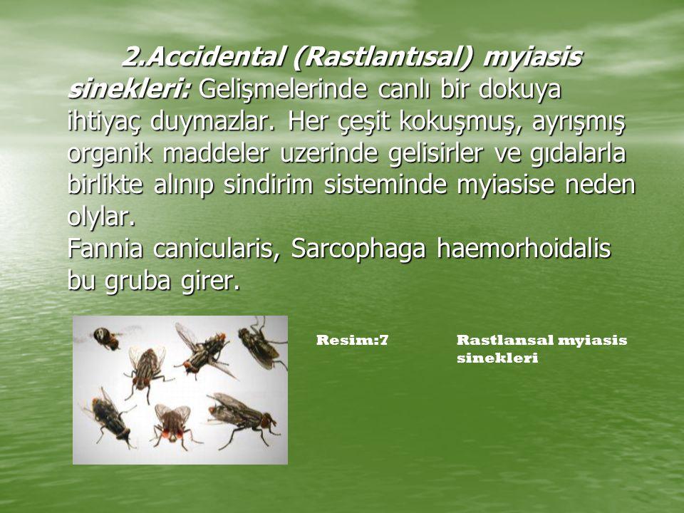 2.Accidental (Rastlantısal) myiasis sinekleri: Gelişmelerinde canlı bir dokuya ihtiyaç duymazlar. Her çeşit kokuşmuş, ayrışmış organik maddeler uzerinde gelisirler ve gıdalarla birlikte alınıp sindirim sisteminde myiasise neden olylar. Fannia canicularis, Sarcophaga haemorhoidalis bu gruba girer.