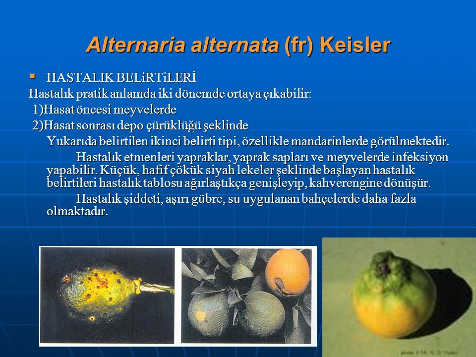 Alternaria alternata (fr) Keisler