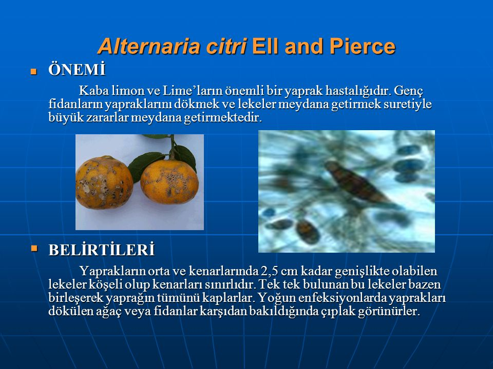 Alternaria citri Ell and Pierce