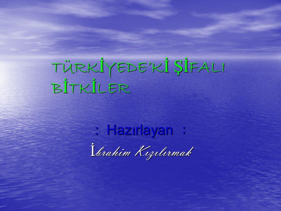 TÜRKİYEDE'Kİ ŞİFALI BİTKİLER