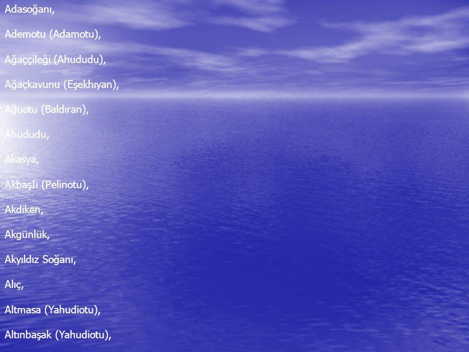 Adasoğanı, Ademotu (Adamotu), Ağaççileği (Ahududu), Ağaçkavunu (Eşekhıyan), Ağuotu (Baldıran), Ahududu,