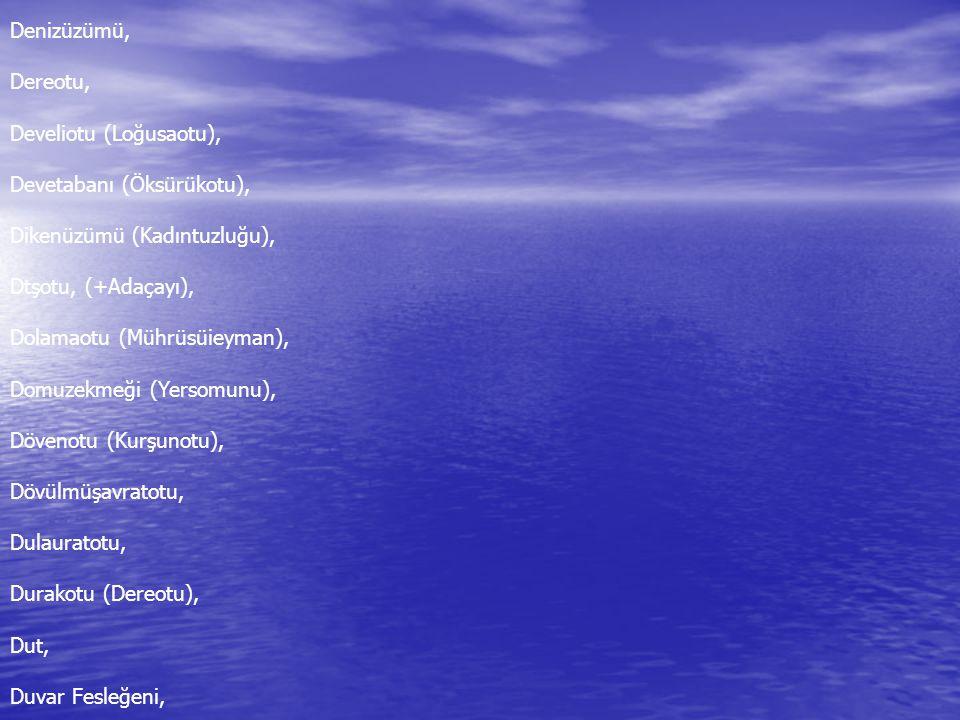 Denizüzümü, Dereotu, Develiotu (Loğusaotu), Devetabanı (Öksürükotu), Dikenüzümü (Kadıntuzluğu), Dtşotu, (+Adaçayı),