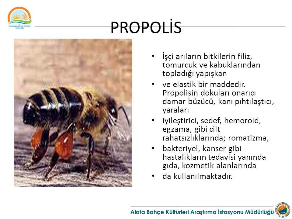 PROPOLİS İşçi arıların bitkilerin filiz, tomurcuk ve kabuklarından topladığı yapışkan.