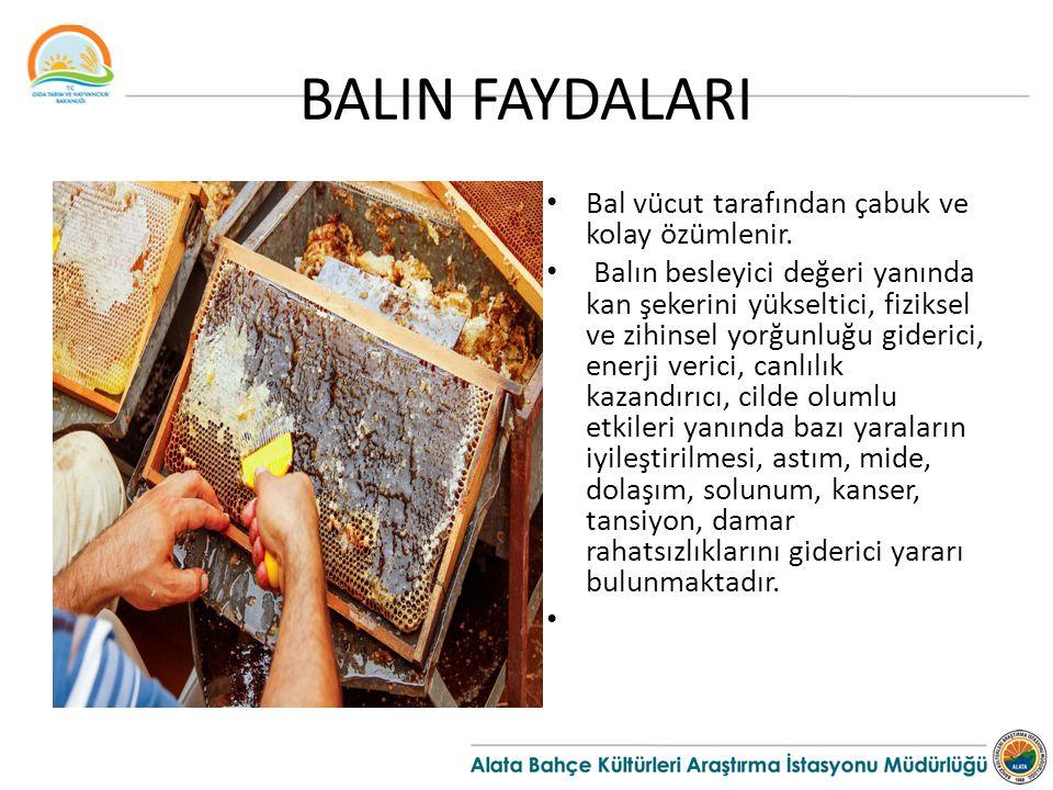 BALIN FAYDALARI Bal vücut tarafından çabuk ve kolay özümlenir.