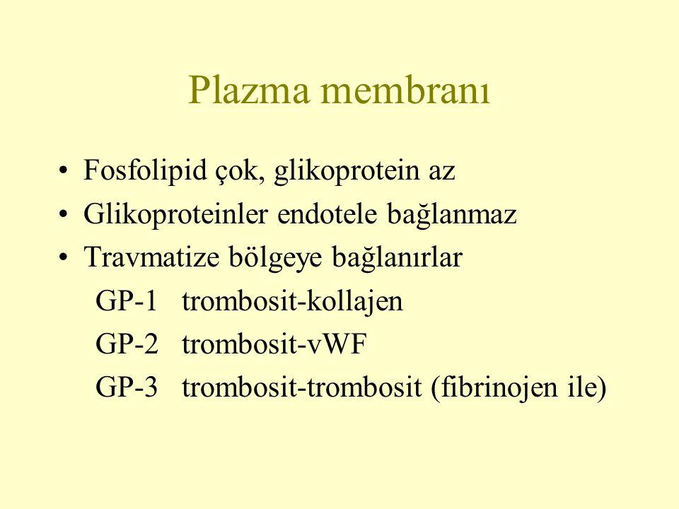 Plazma membranı Fosfolipid çok, glikoprotein az