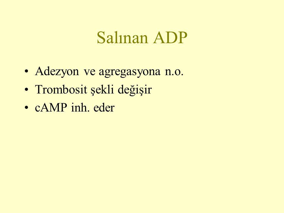 Salınan ADP Adezyon ve agregasyona n.o. Trombosit şekli değişir