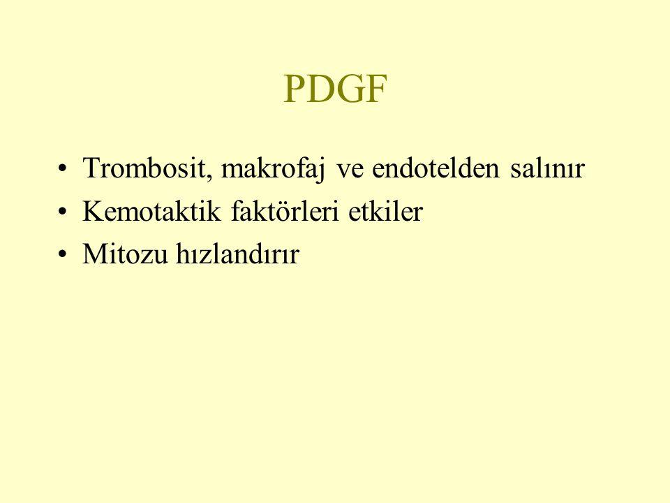 PDGF Trombosit, makrofaj ve endotelden salınır