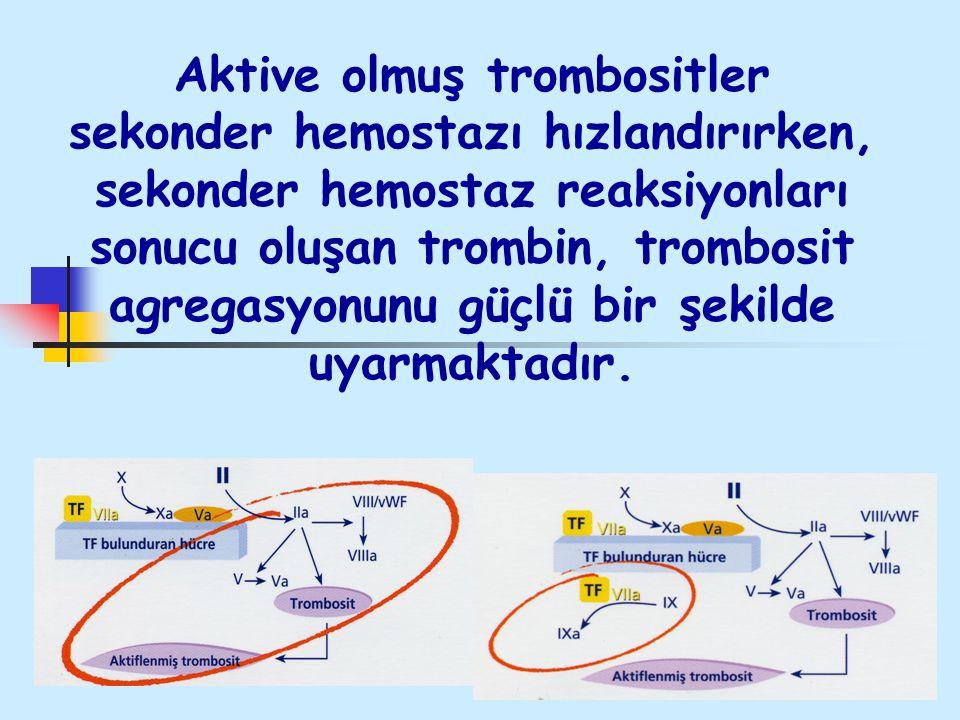 Aktive olmuş trombositler sekonder hemostazı hızlandırırken, sekonder hemostaz reaksiyonları sonucu oluşan trombin, trombosit agregasyonunu güçlü bir şekilde uyarmaktadır.