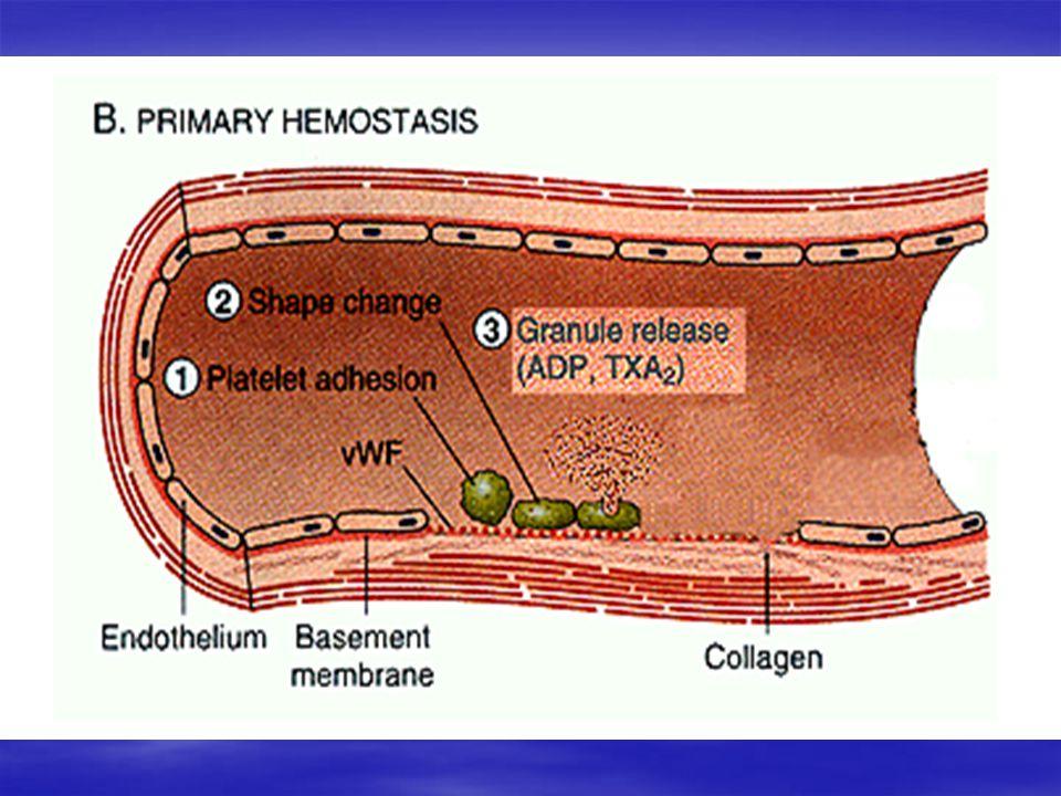 Hemostasis 3