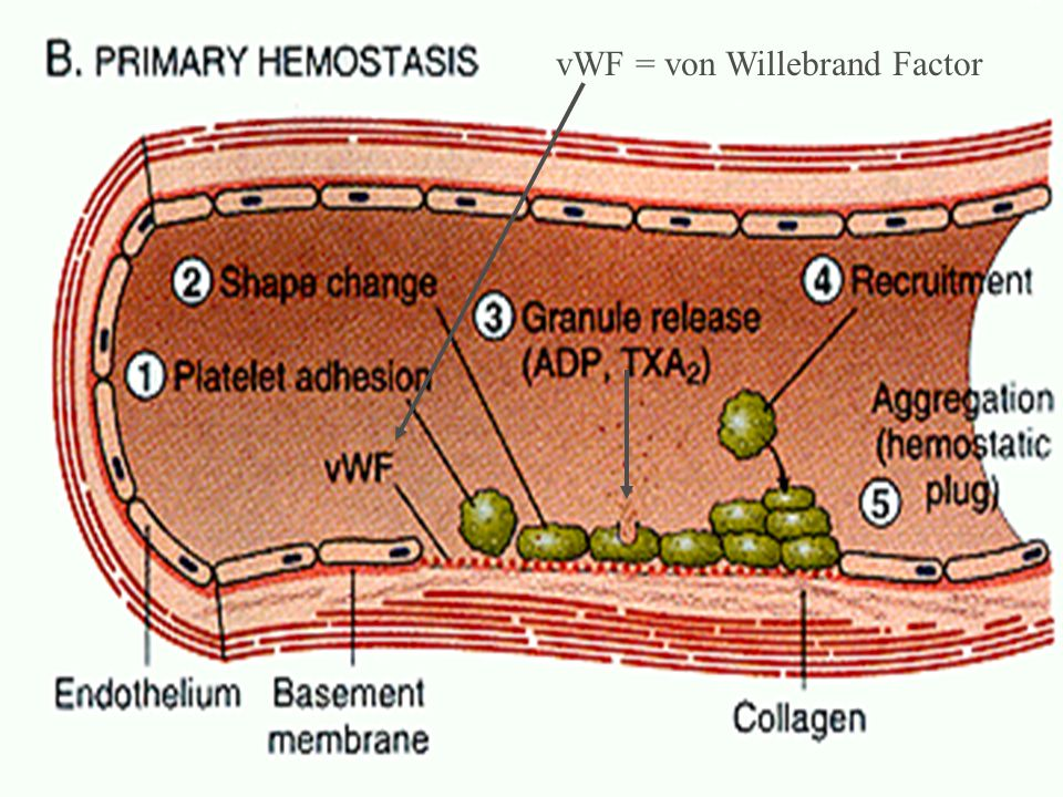 summary vWF = von Willebrand Factor