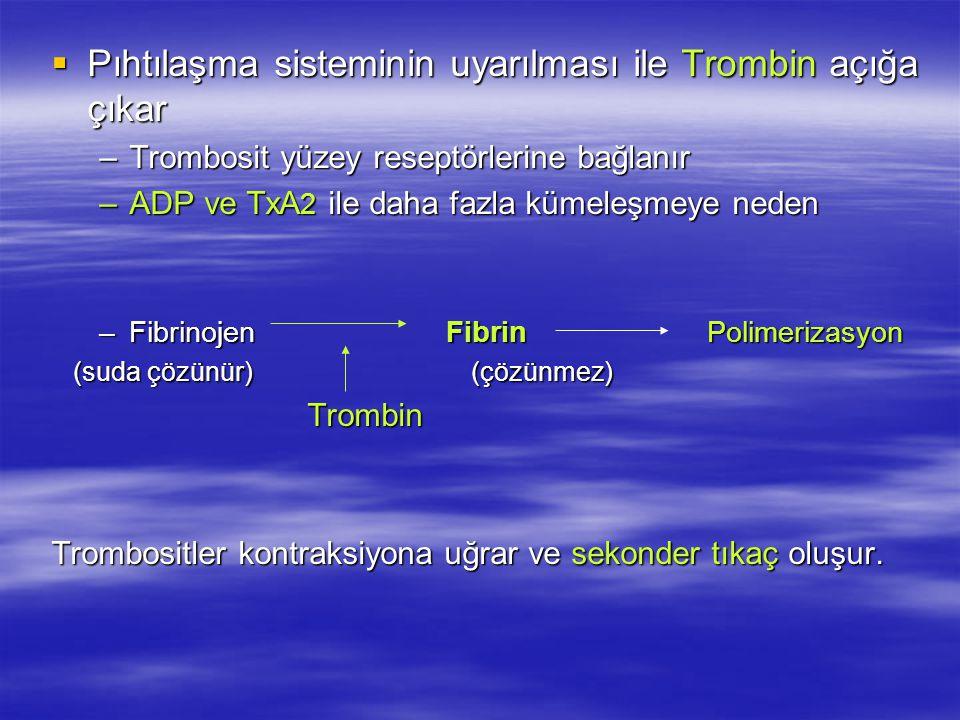 Pıhtılaşma sisteminin uyarılması ile Trombin açığa çıkar