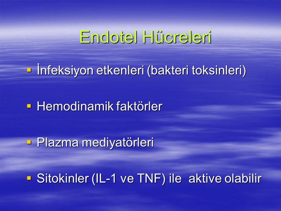 Endotel Hücreleri İnfeksiyon etkenleri (bakteri toksinleri)