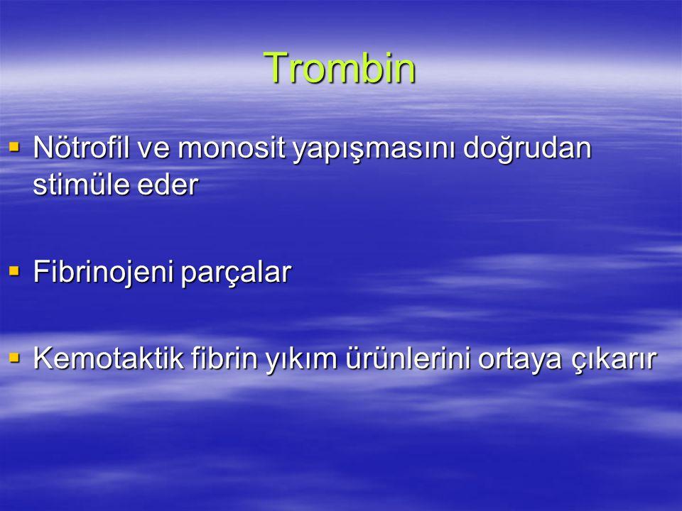 Trombin Nötrofil ve monosit yapışmasını doğrudan stimüle eder