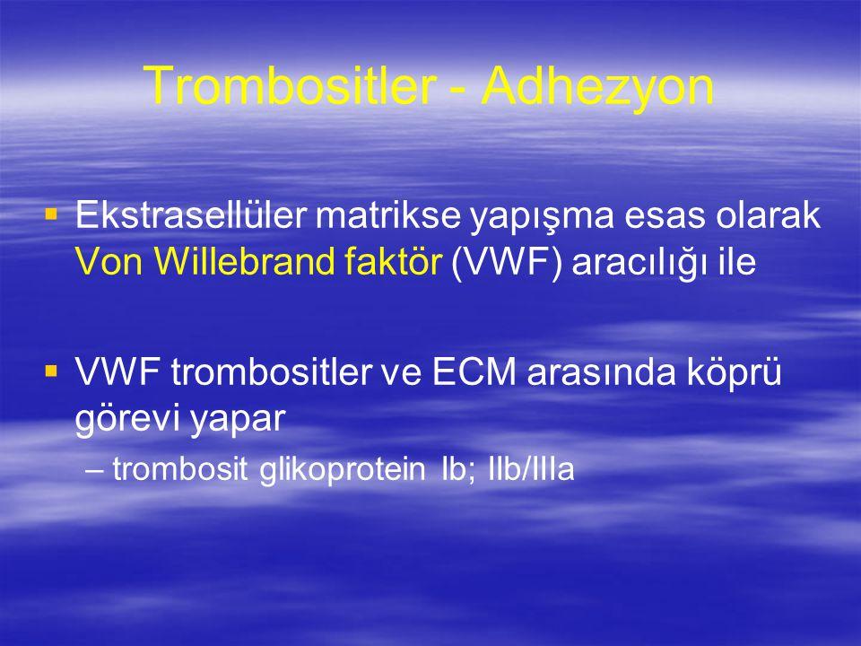 Trombositler - Adhezyon