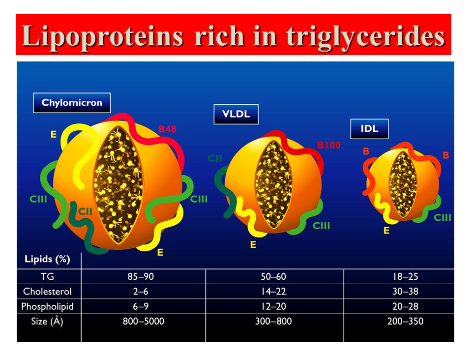 Lipoproteins rich in triglycerides