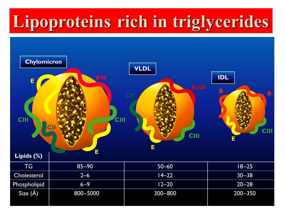 Lipoproteins rich in triglycerides