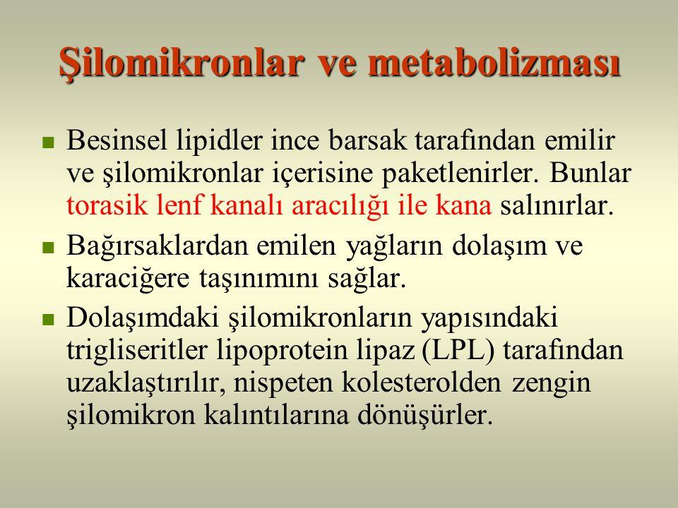 Şilomikronlar ve metabolizması