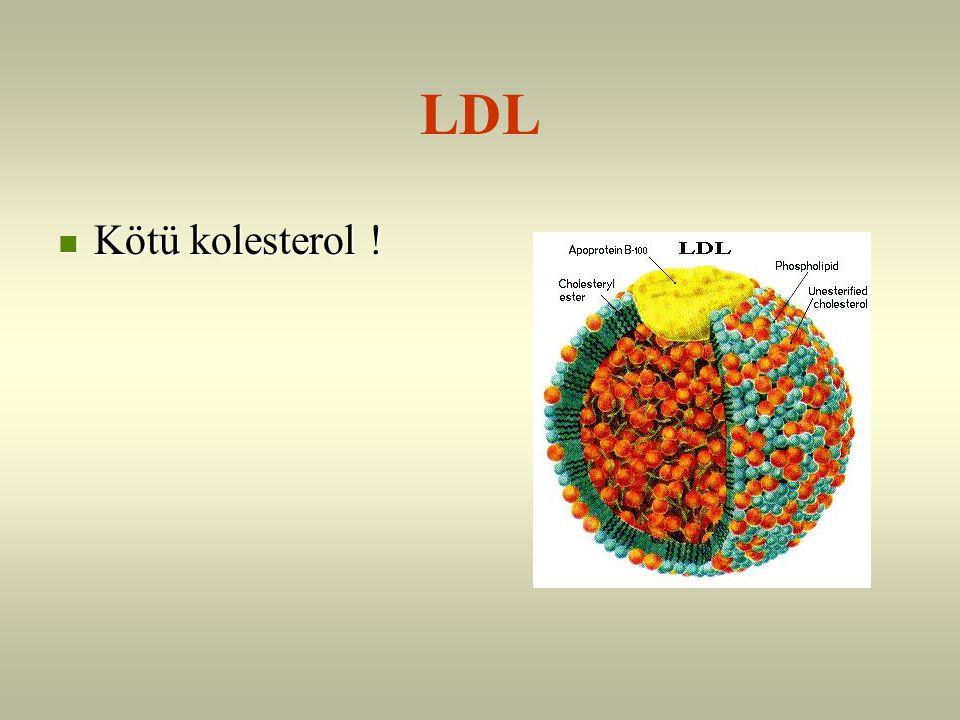 LDL Kötü kolesterol !