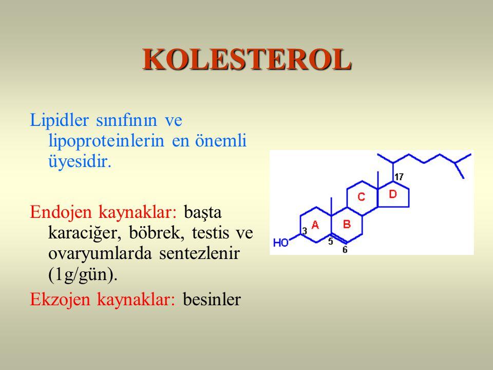 KOLESTEROL Lipidler sınıfının ve lipoproteinlerin en önemli üyesidir.