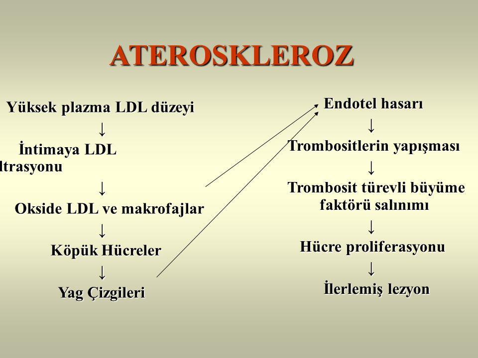 ATEROSKLEROZ Endotel hasarı Yüksek plazma LDL düzeyi ↓ ↓