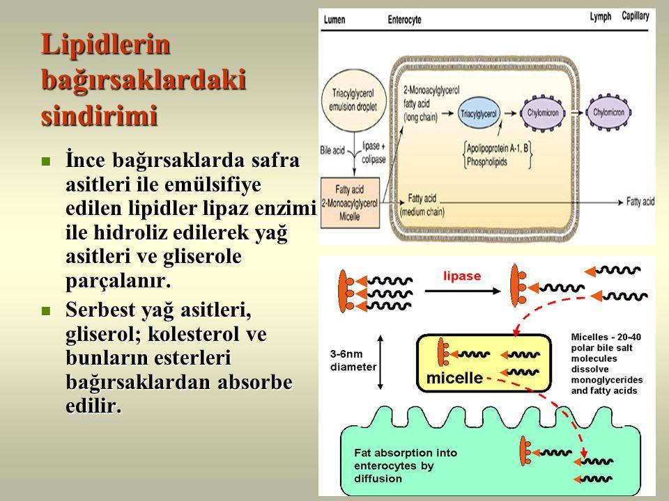Lipidlerin bağırsaklardaki sindirimi