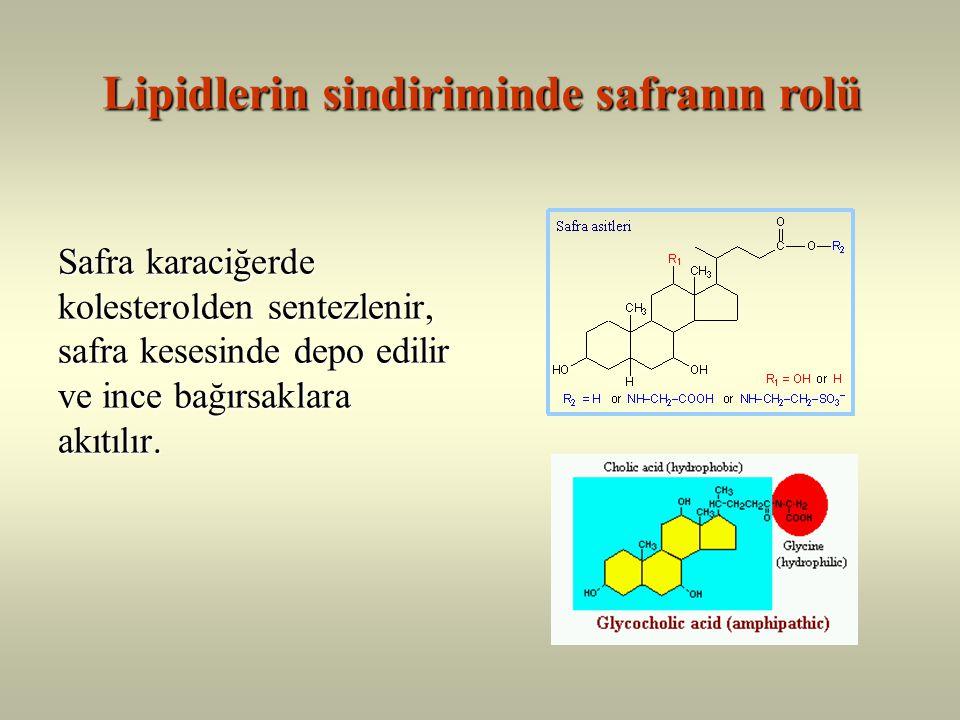 Lipidlerin sindiriminde safranın rolü