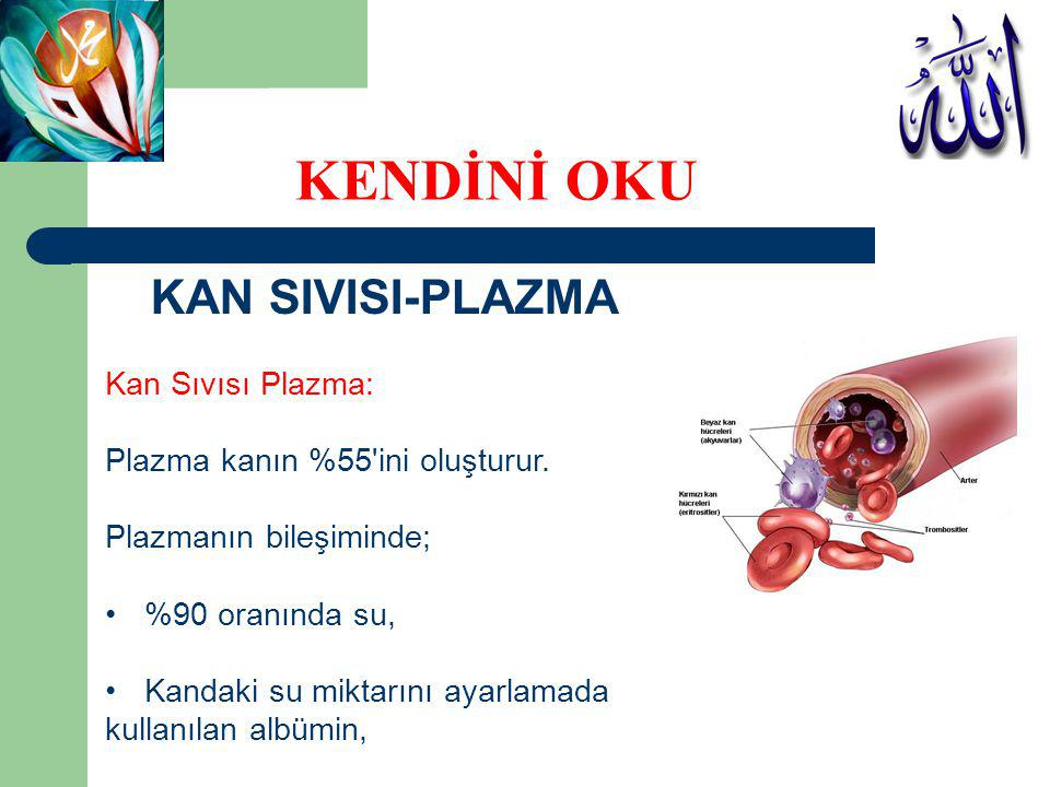 KENDİNİ OKU KAN SIVISI-PLAZMA Kan Sıvısı Plazma:
