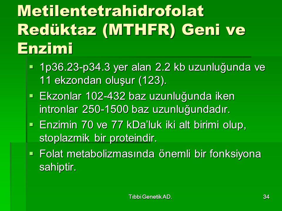 Metilentetrahidrofolat Redüktaz (MTHFR) Geni ve Enzimi