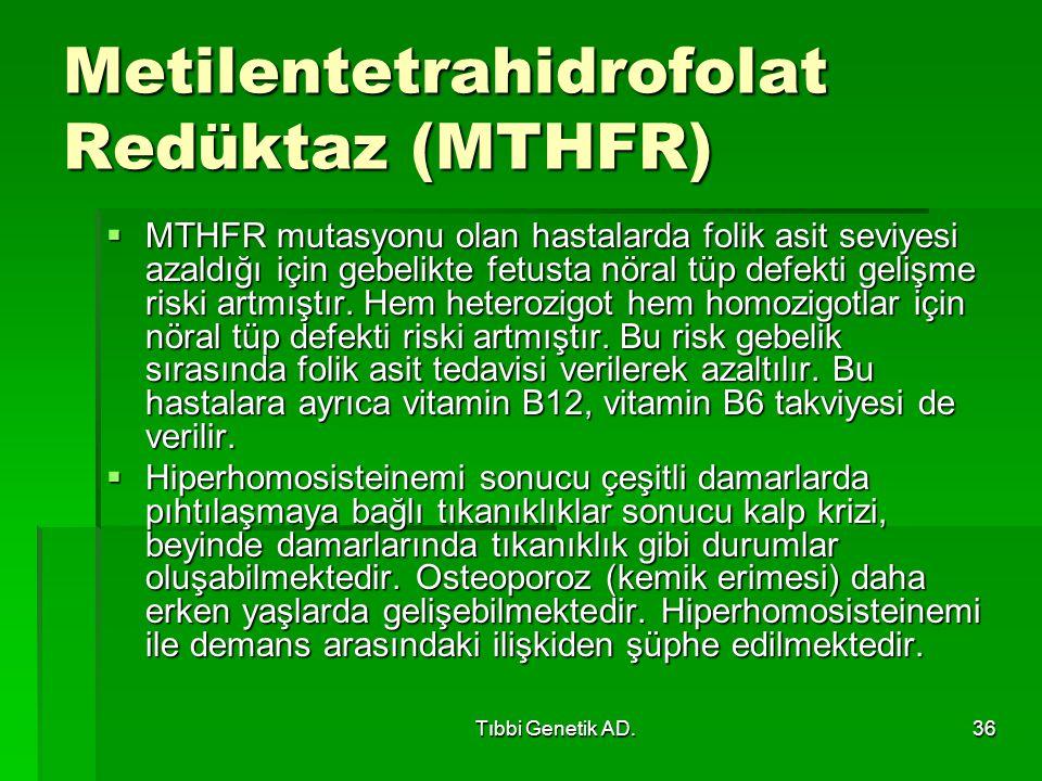 Metilentetrahidrofolat Redüktaz (MTHFR)