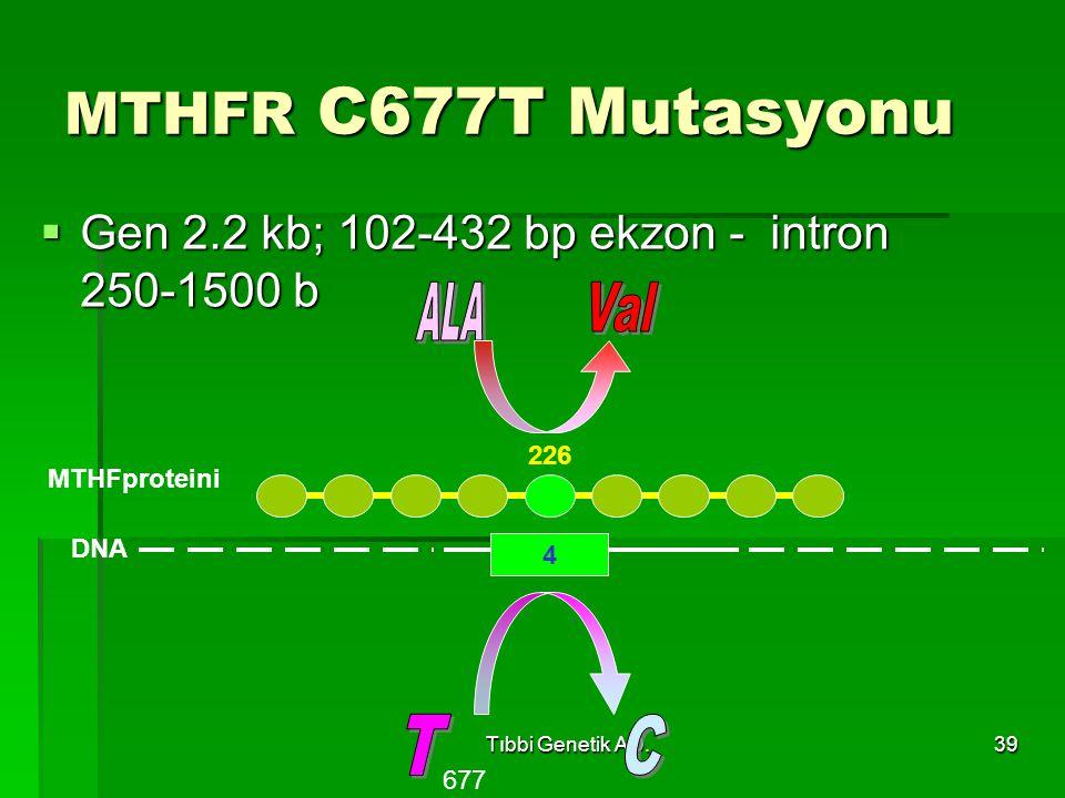 MTHFR C677T Mutasyonu ALA Val T C