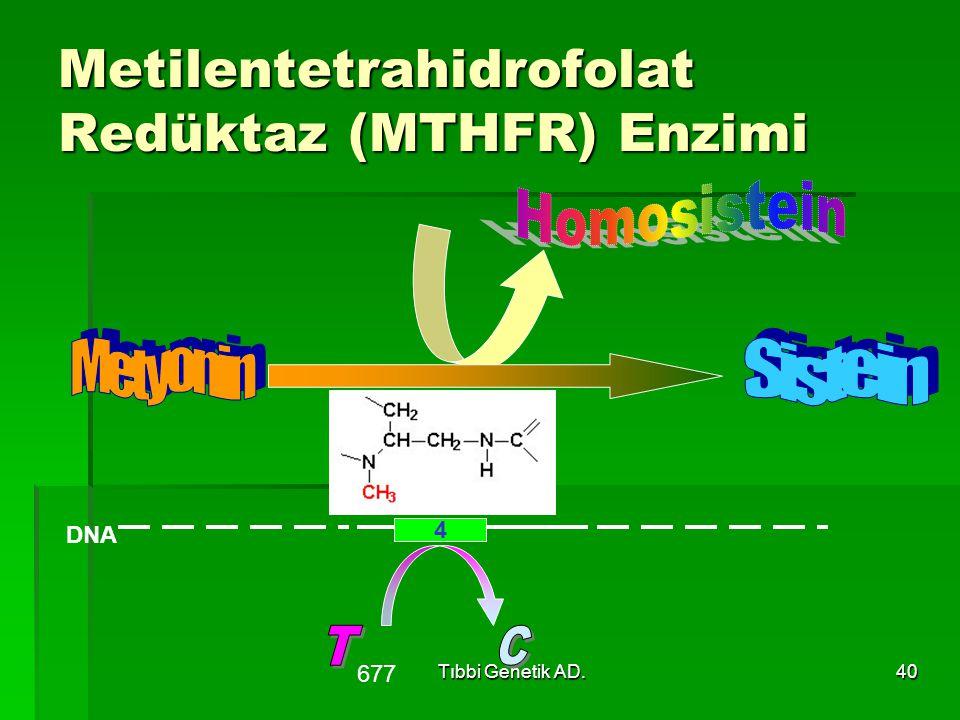 Metilentetrahidrofolat Redüktaz (MTHFR) Enzimi