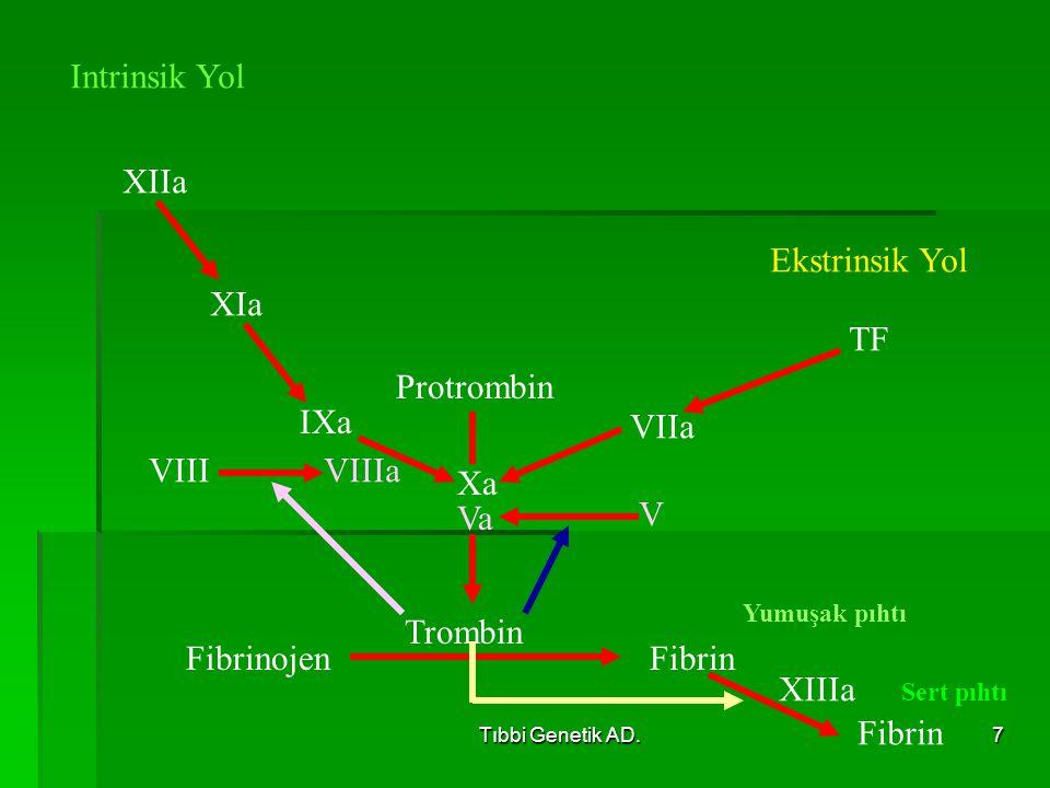 Intrinsik Yol XIIa Ekstrinsik Yol XIa TF Protrombin IXa VIIa VIII